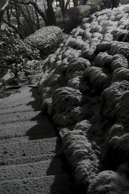 雪の動物達 紺屋坂脇石段坂