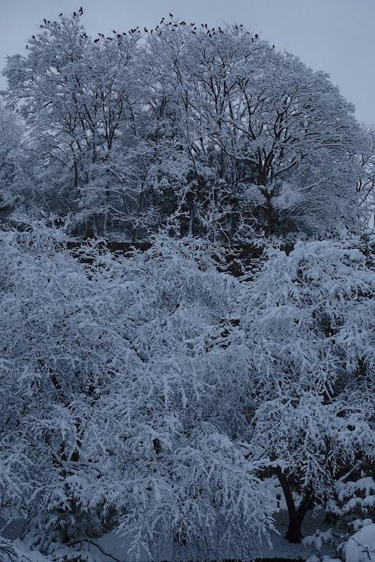 雪林烏図 金沢城「本丸園地の森」